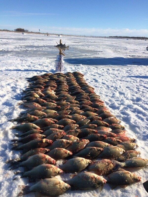 Trending now white bass devils lake fishing for Devils lake ice fishing reports