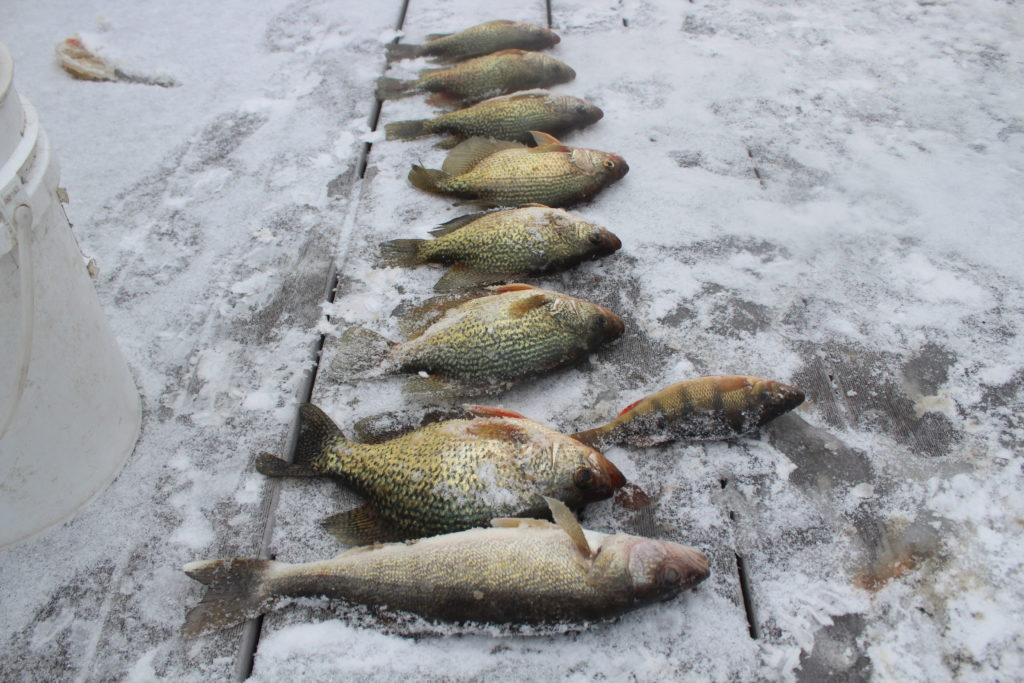 Mixed bag alert devils lake fishing report for Devils lake fishing report 2017