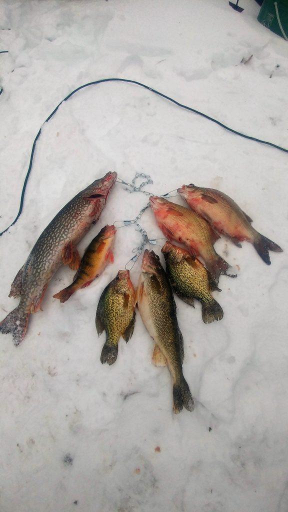 Devils lake super slam devils lake fishing report for Devils lake ice fishing reports
